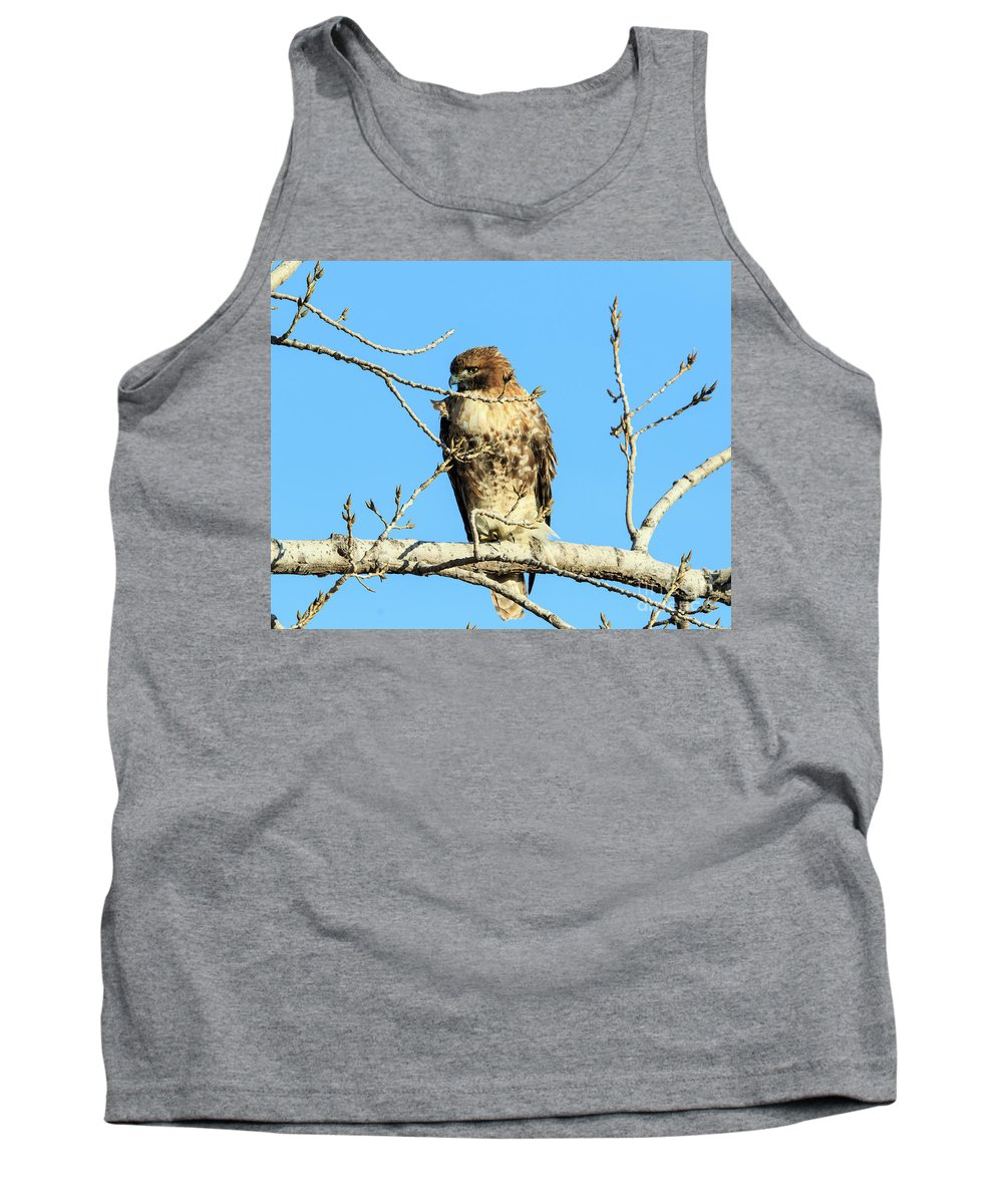 Eagles Tank Top featuring the photograph Baby Bald Eagle by Terri Morris