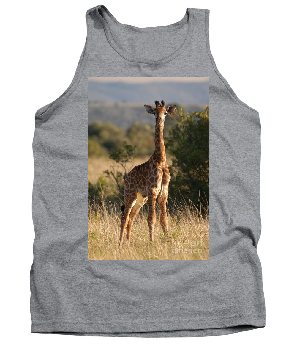 Giraffe Tank Top featuring the photograph Baby Giraffe by Andy Smy