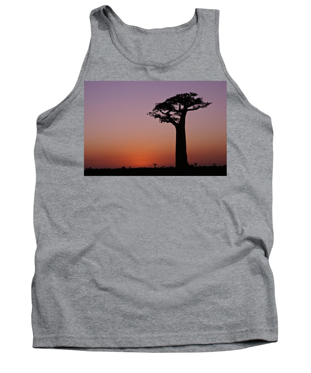 Madagascar Tank Top featuring the photograph Baobab At Sunset by Michele Burgess