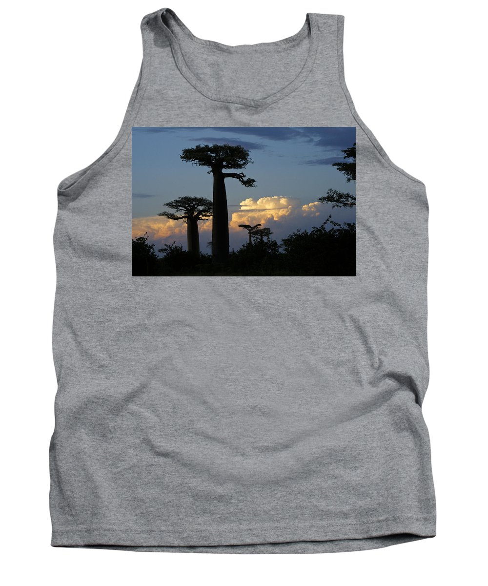 Madagascar Tank Top featuring the photograph Baobabs And Storm Clouds by Michele Burgess