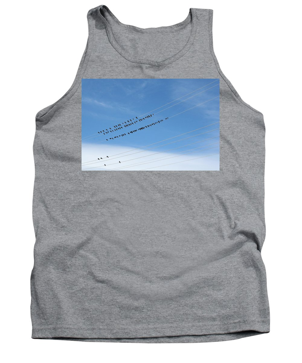Birds Tank Top featuring the photograph Birds On Wires by Ric Bascobert