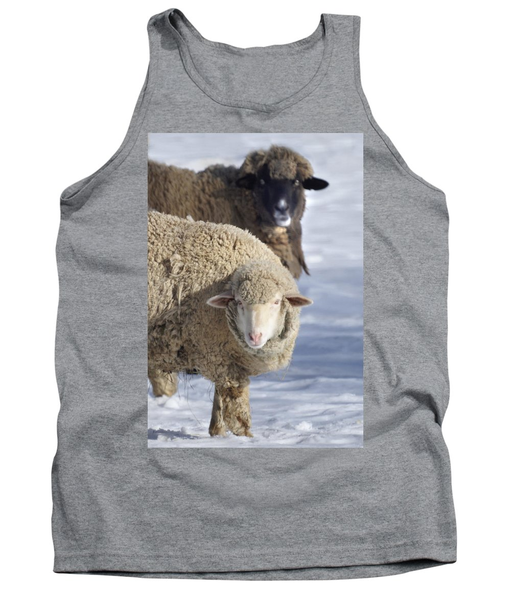 Sheep Tank Top featuring the photograph Black And White by Heather Coen