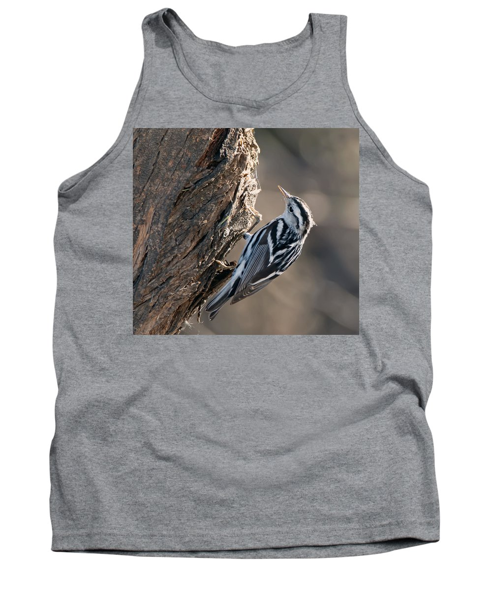 Black_and_white_warbler Tank Top featuring the photograph Black And White Warbler by Tam Ryan