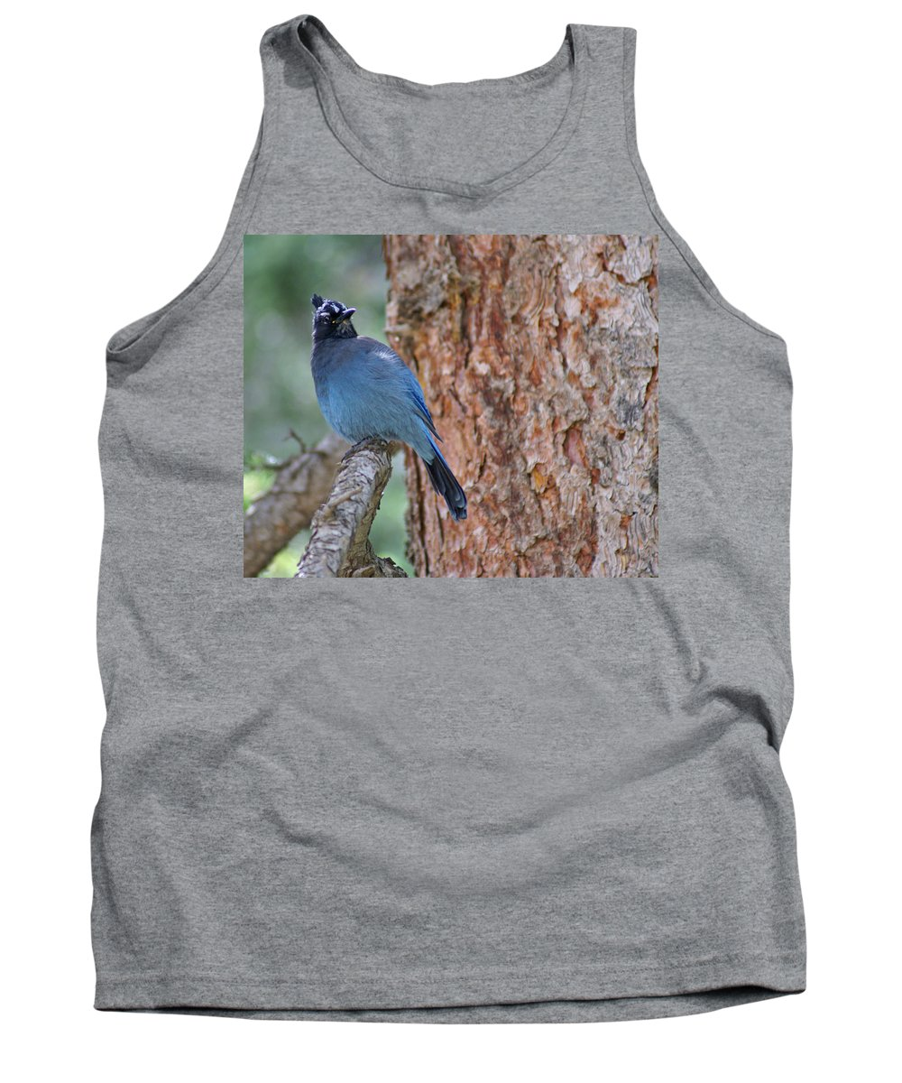 Blue Jay Tank Top featuring the photograph Blue Jay by Heather Coen