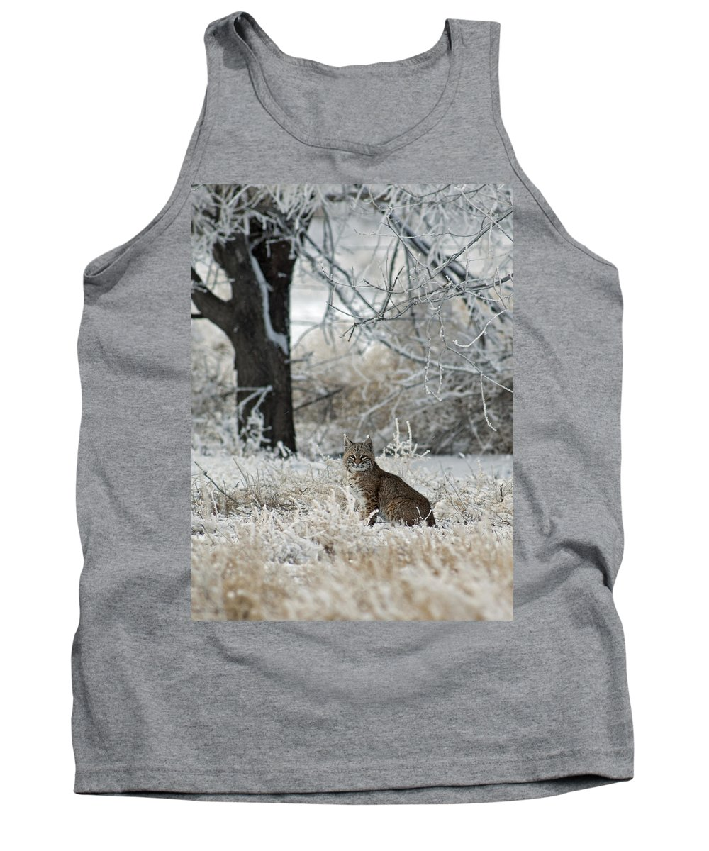 Bobcat Tank Top featuring the photograph Bobcat And Heavy Frost by Gary Langley