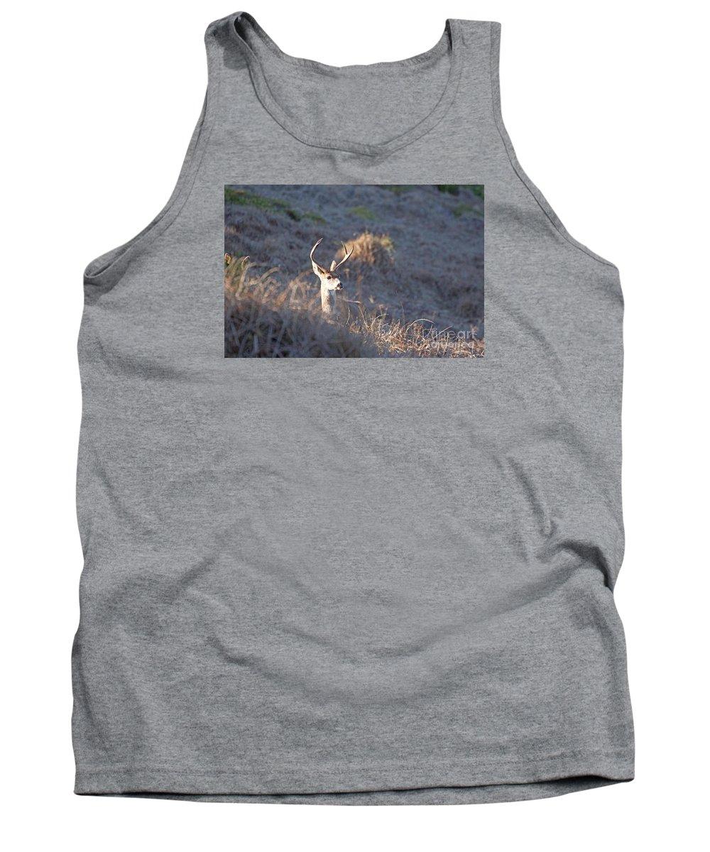 Deer Tank Top featuring the photograph Buck by Marta Robin Gaughen