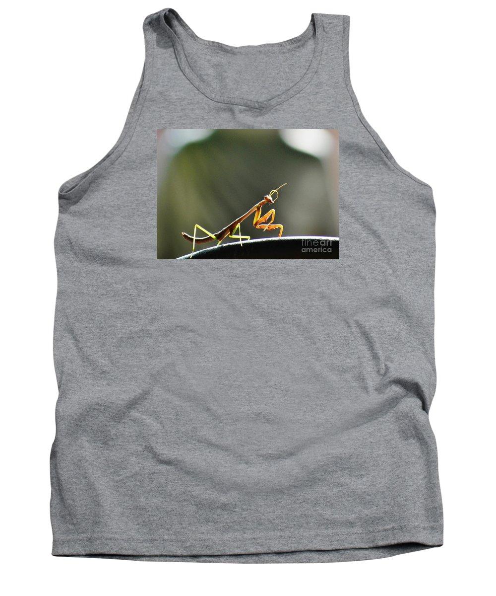Caterpillar Tank Top featuring the photograph Buddha Bow by Virginia Levasseur