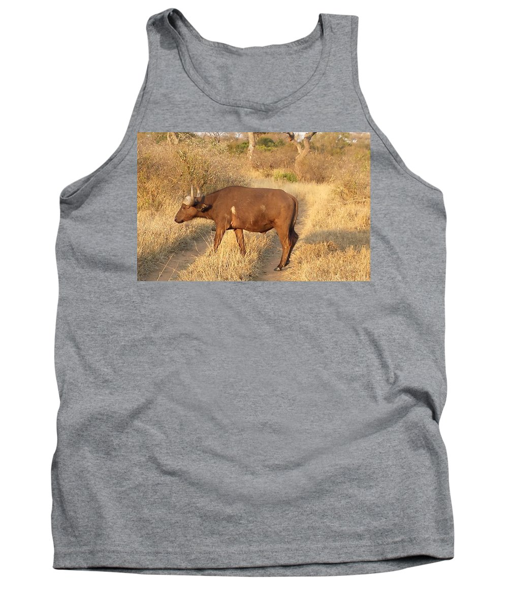 Buffalo Tank Top featuring the photograph Buffalo Crossing by Lisa Byrne