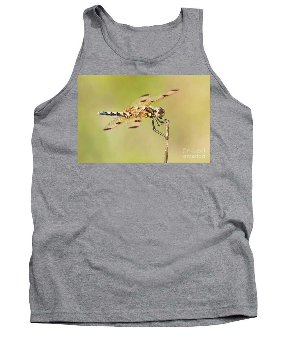Animal Tank Top featuring the photograph Calico Pennant by Abeselom Zerit
