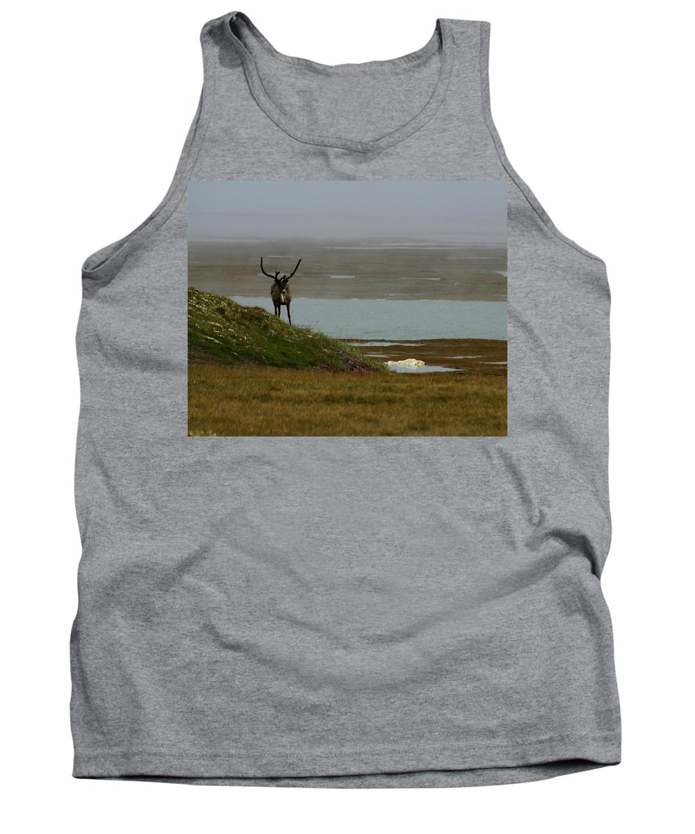 Caribou Tank Top featuring the photograph Caribou Fog by Anthony Jones