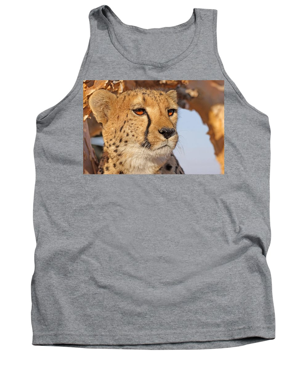Cheetah Portrait Tank Top featuring the photograph Cheetah Portrait by Aivar Mikko