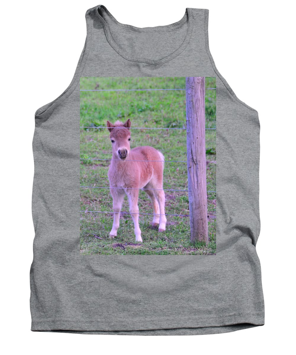 Young Animals Tank Top featuring the photograph Colt Pony by David Arment