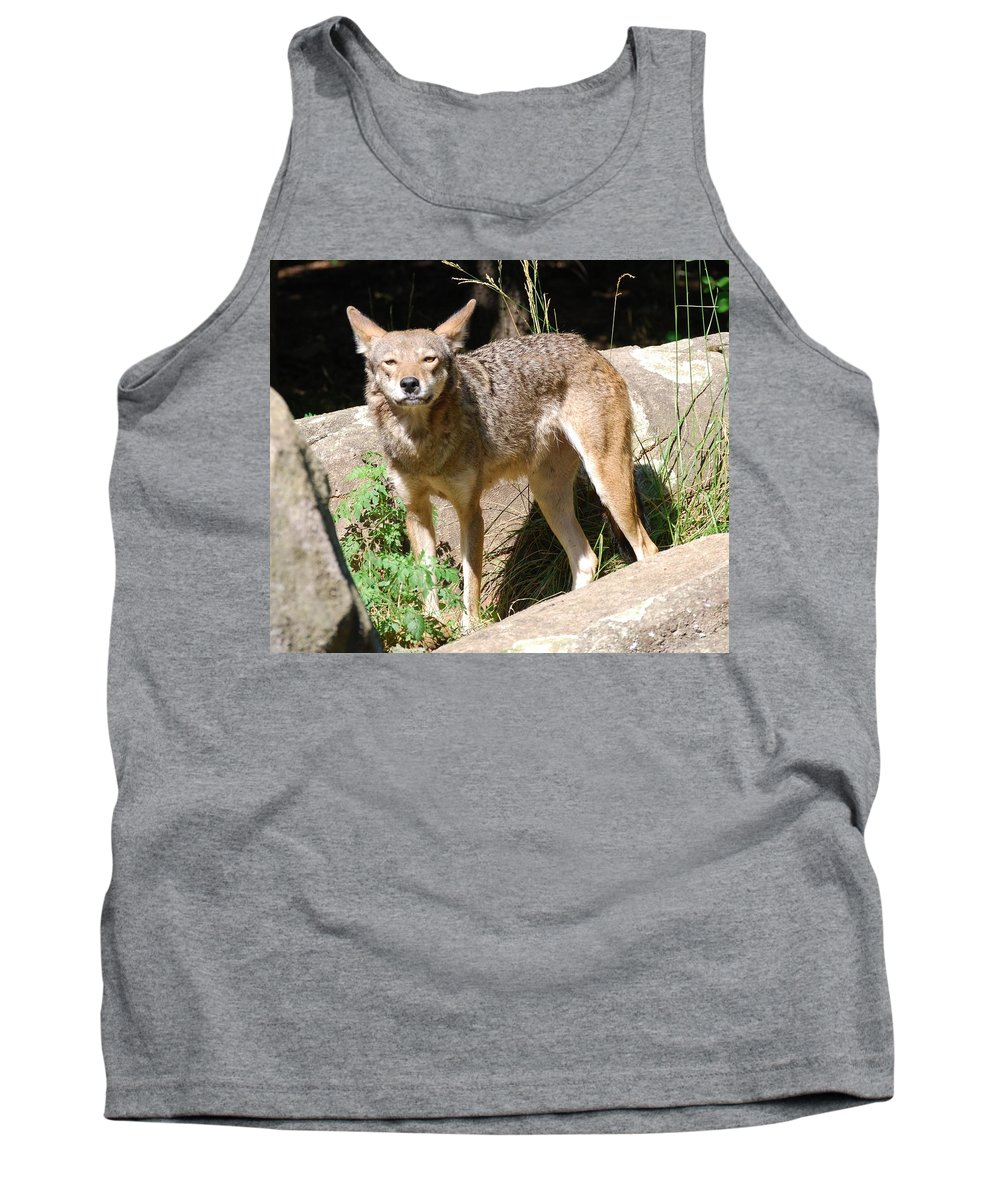 Coyote Tank Top featuring the photograph Coyote Grin by Eric Liller