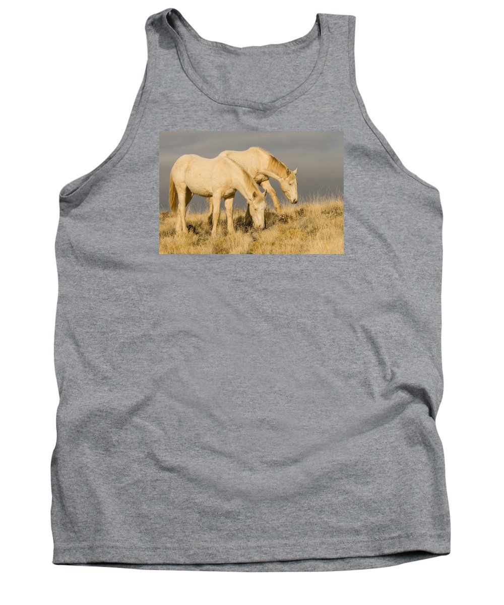 Wild Horse Tank Top featuring the photograph First Year by Kent Keller