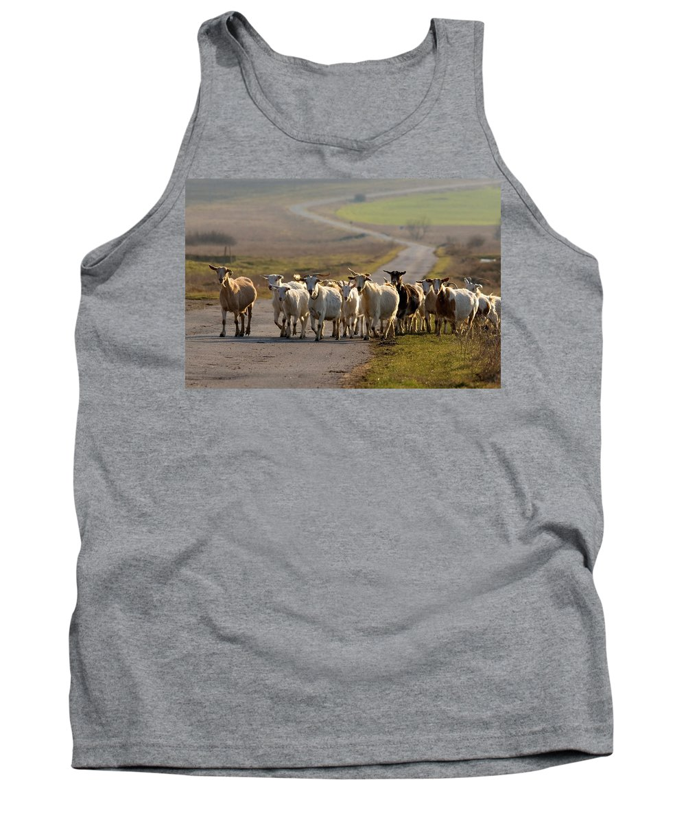 Goat Tank Top featuring the photograph Goats Walking Home by Cliff Norton
