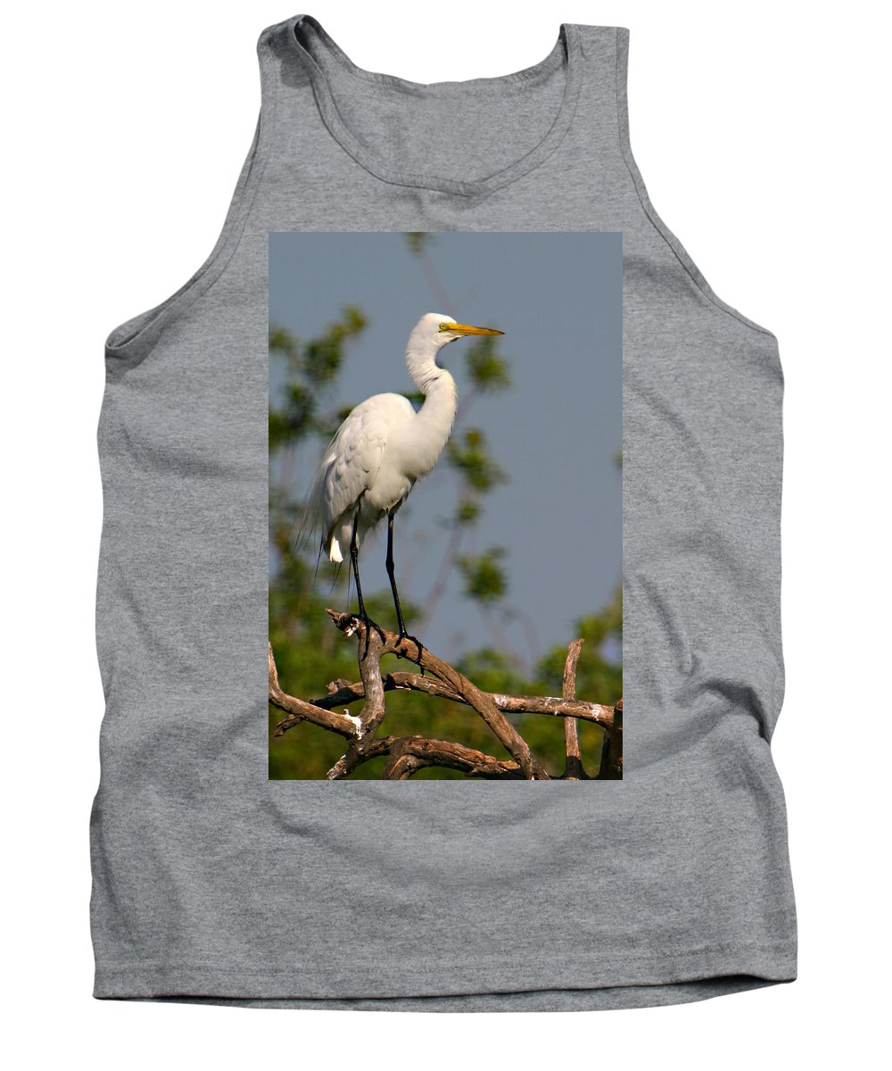 Great White Egret Bird Feathers Flying Florida Sanctuary Wildlife Photograph Photography Tank Top featuring the photograph Great White Egret Pose by Shari Jardina