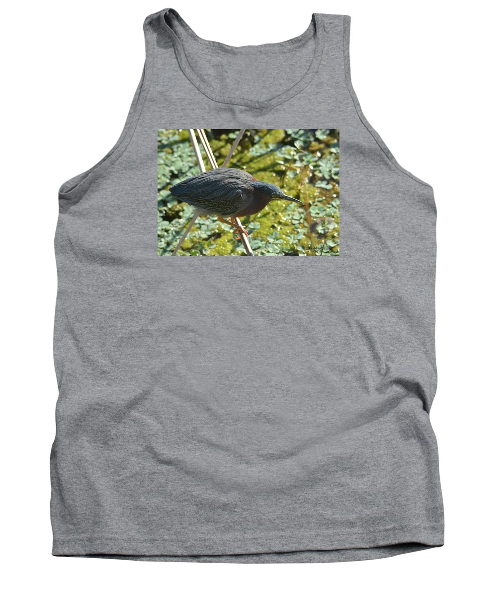 Green Heron Tank Top featuring the pyrography Green Heron On Stilts by Sally Sperry