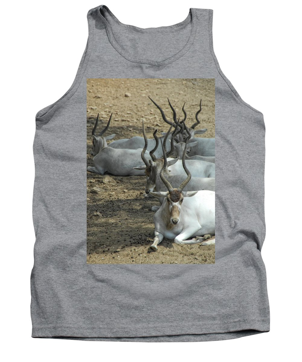 Addax Tank Top featuring the photograph Horney by Donna Blackhall
