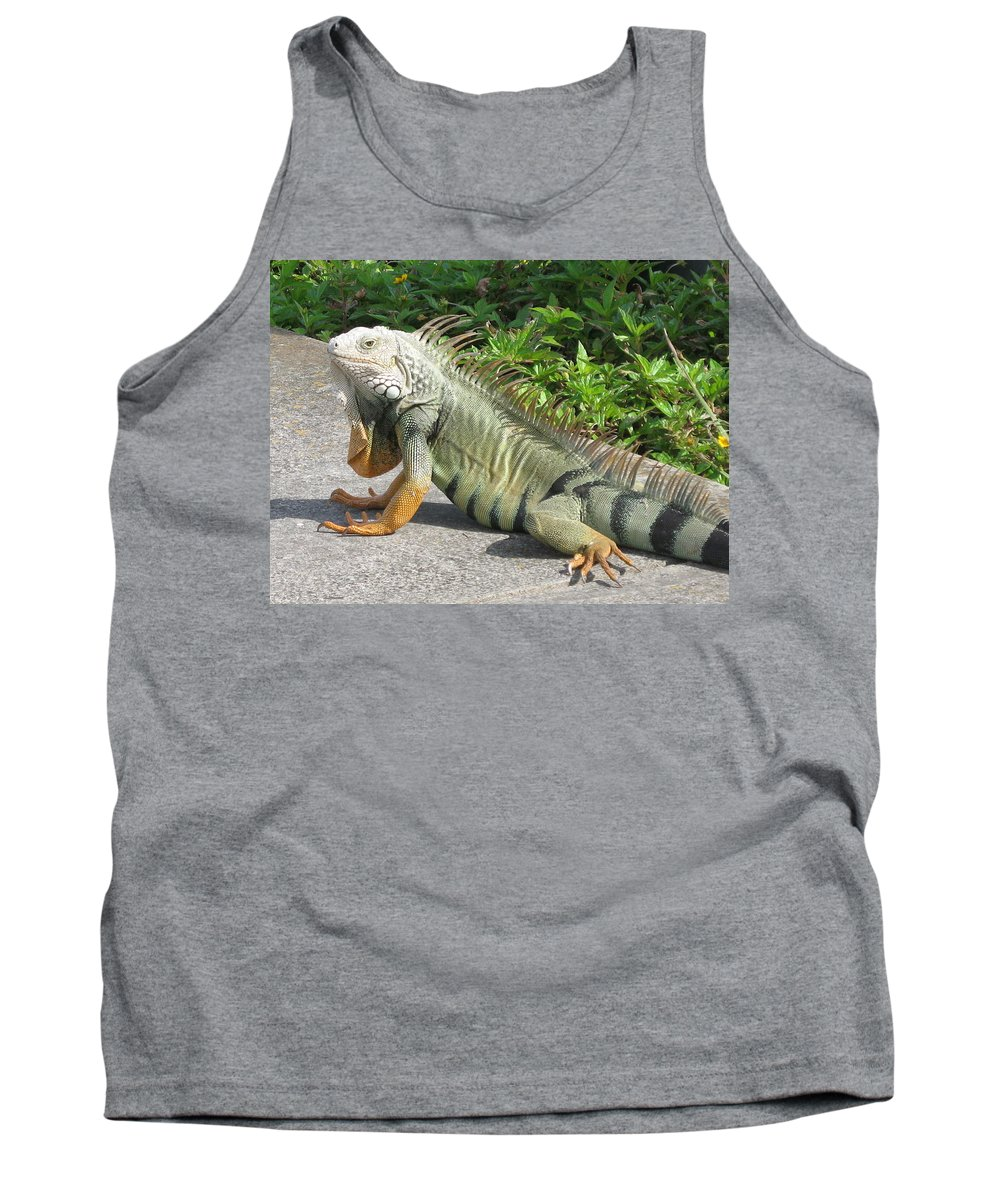 Iguania Tank Top featuring the photograph Iguania Sunbathing by Christiane Schulze Art And Photography