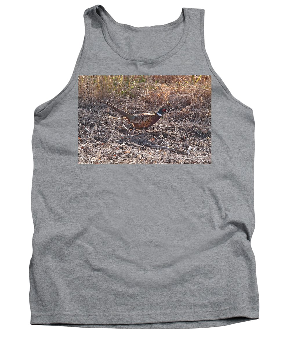 Wild Birds Ring Neck Phesant Wild Nature In Michigan Tank Top featuring the photograph Its A Ring Neck by Robert Pearson