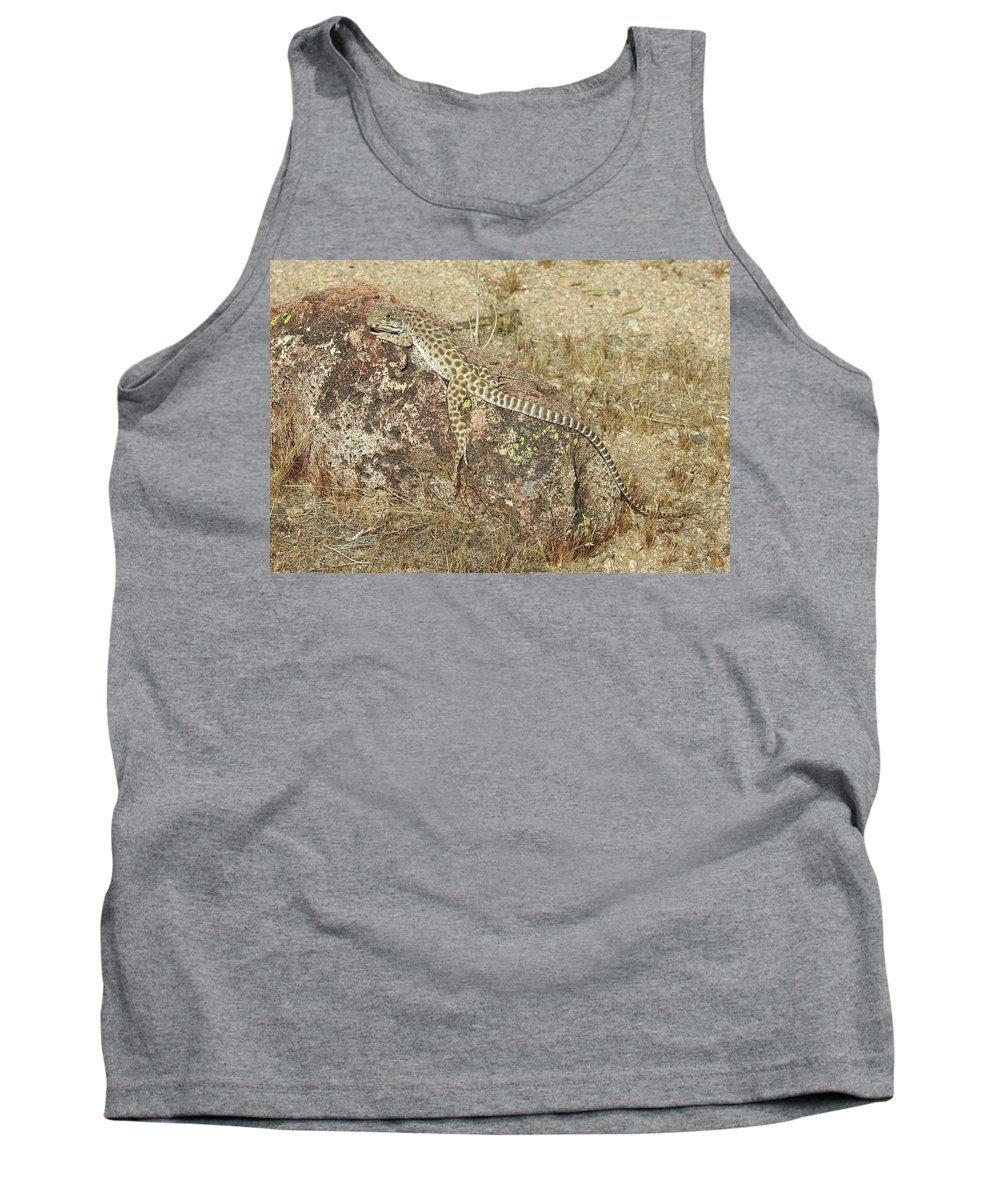 Long-nosed Leopard Lizard Tank Top featuring the photograph Just Hanging Around by Sandra O'Toole