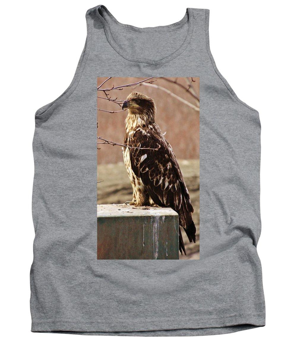Juvenile Eagle Tank Top featuring the photograph Juvenile Eagle by Lori Mahaffey
