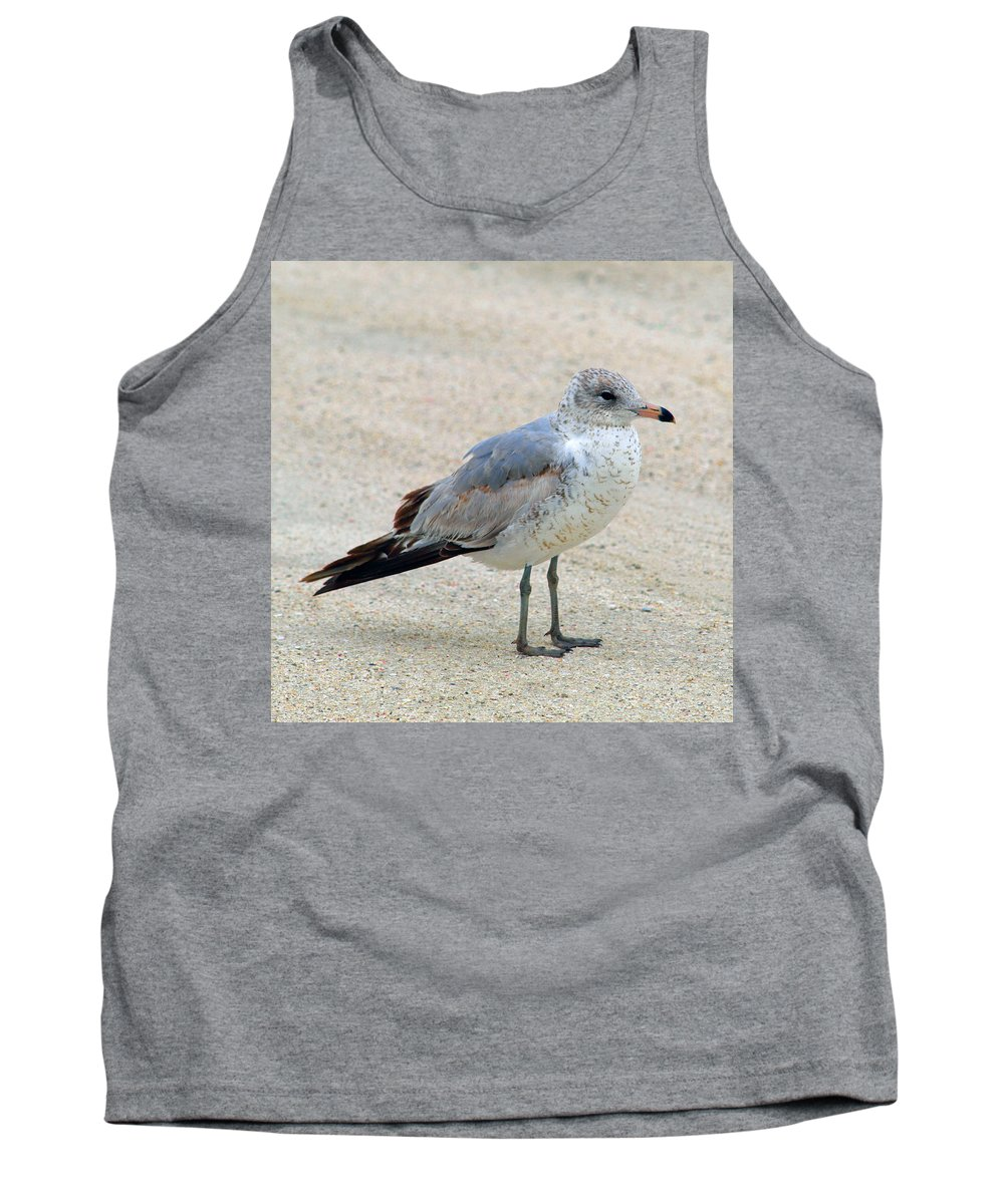 Laughing; Gull; Seagull; Bird; Waterfowl; Seashore; Sebastian; Inlet; Flying; Florida; Larus; Atrici Tank Top featuring the photograph Laughing Gull by Allan Hughes
