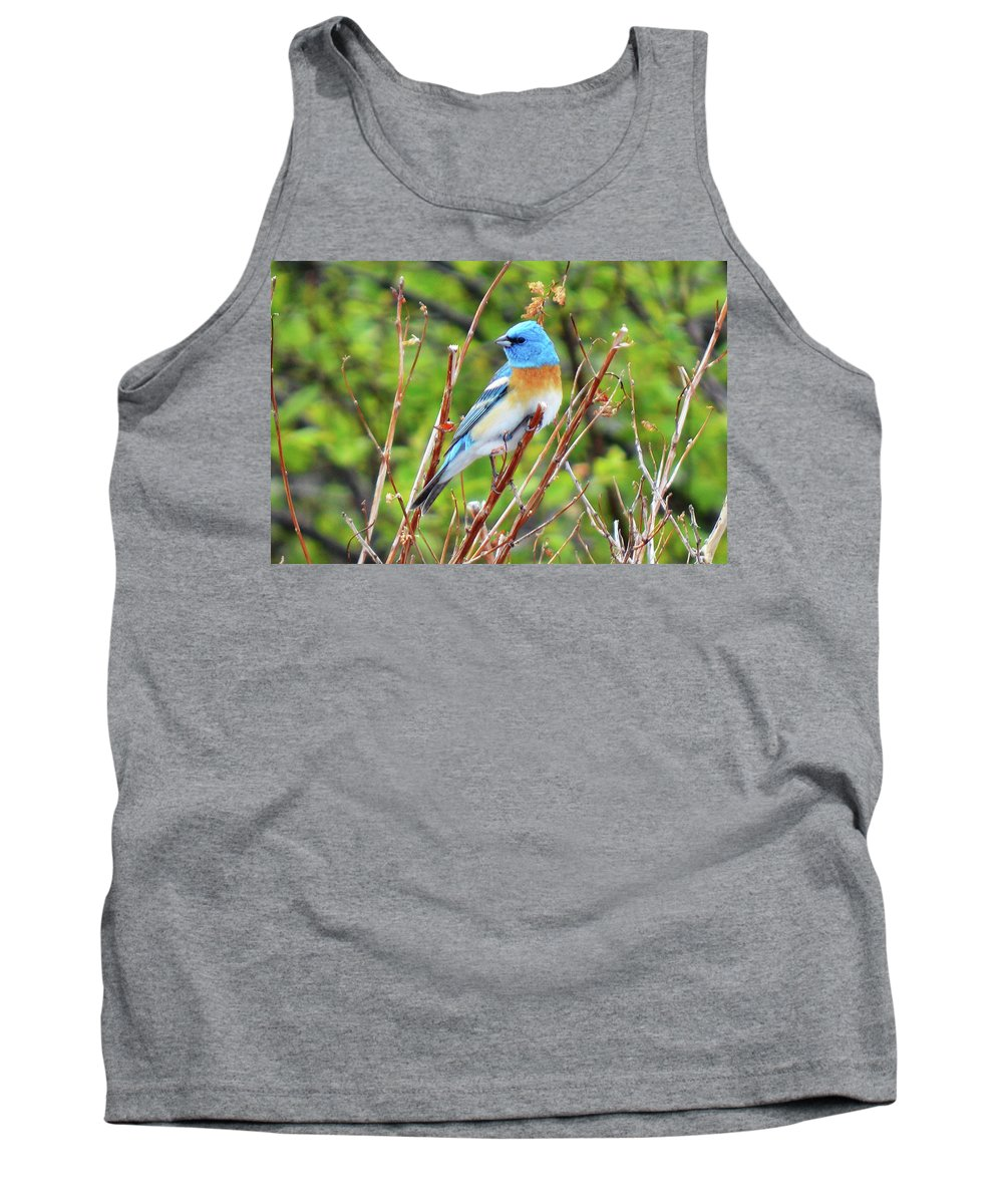 Bird Tank Top featuring the photograph Lazuli Bunting by Tracie Fernandez
