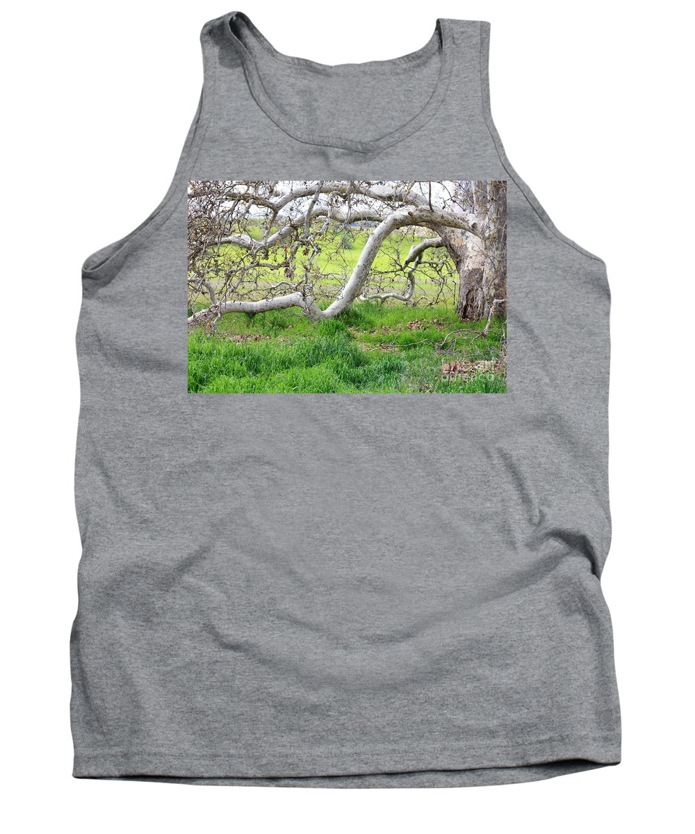 Landscape Tank Top featuring the photograph Low Branches On Sycamore Tree by Carol Groenen