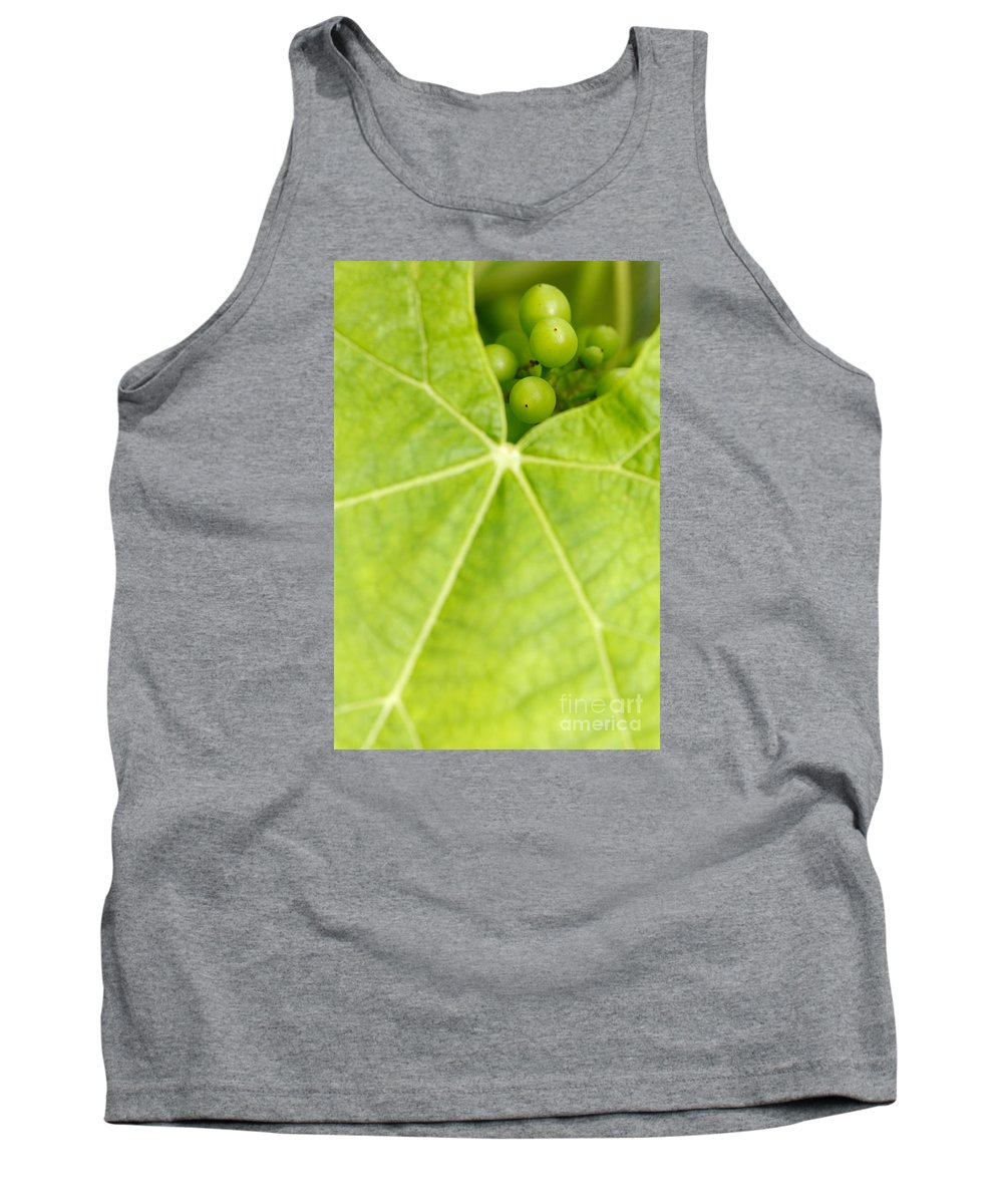 Vineyards Tank Top featuring the photograph Maturing Wine Grapes by Gaspar Avila