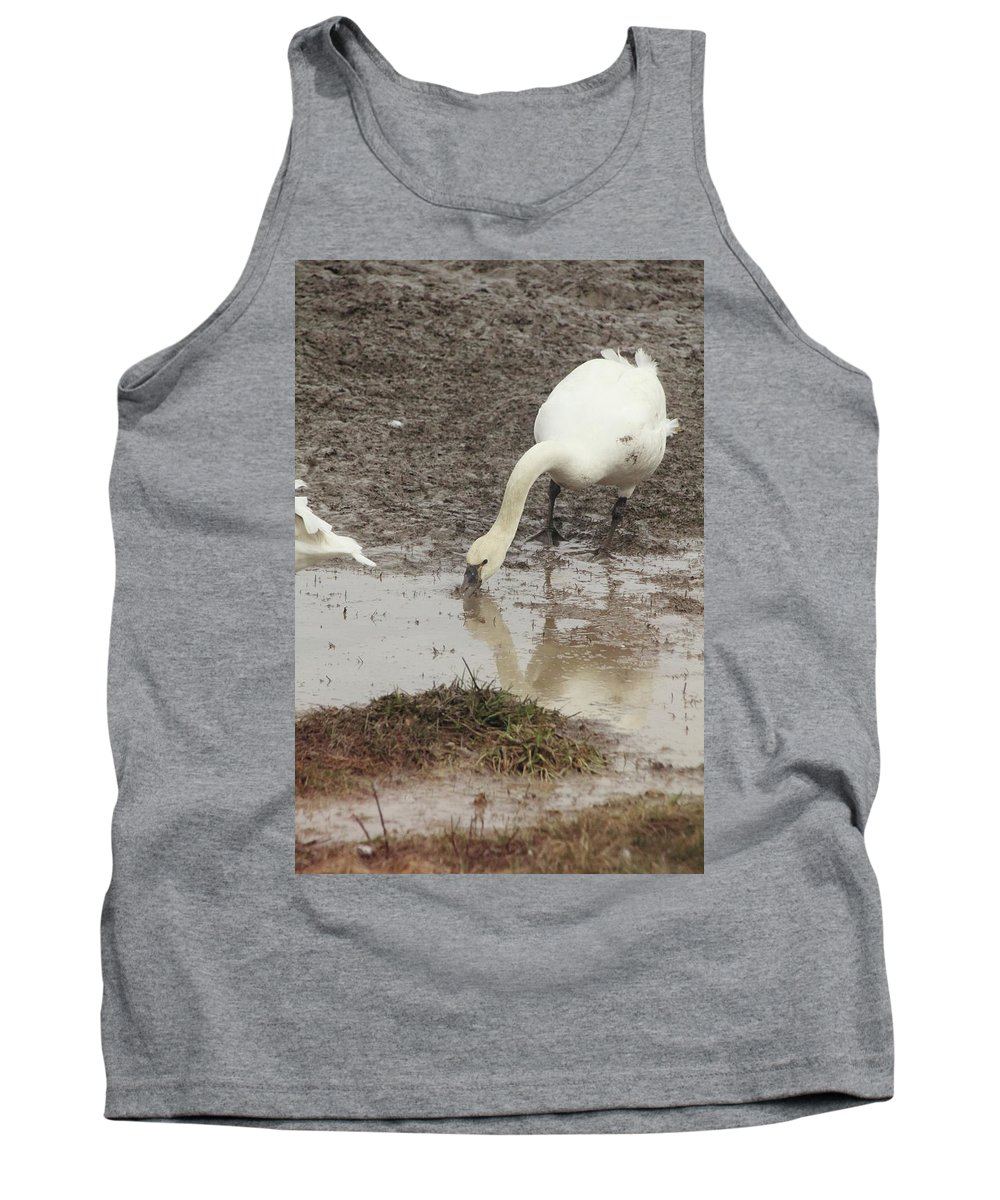 Tundra Swan Tank Top featuring the photograph Muddy Tundra Swan by Stacey Scott