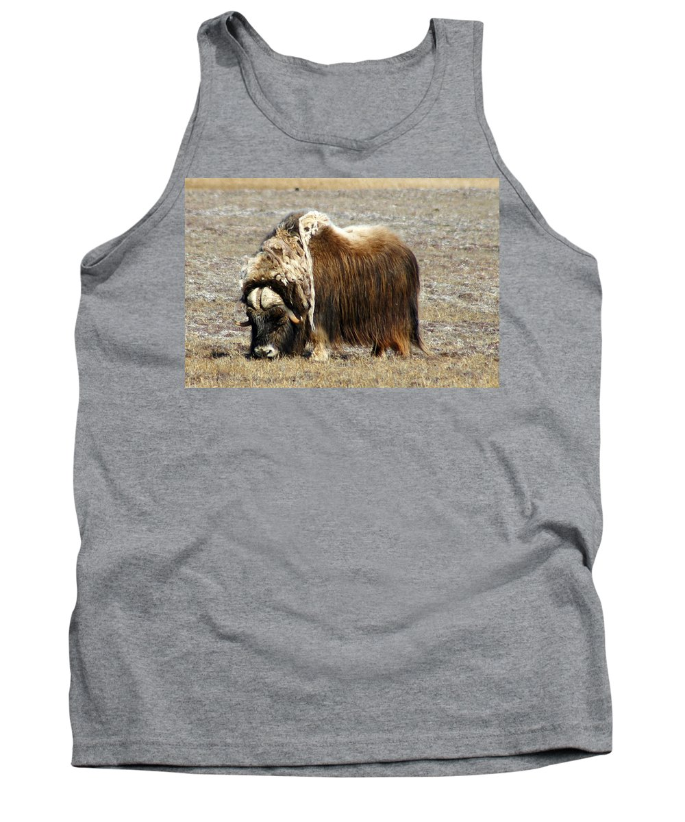 Musk Ox Tank Top featuring the photograph Musk Ox by Anthony Jones