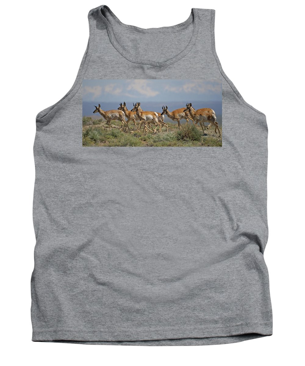 Pronghorn Tank Top featuring the photograph Pronghorn Antelope Running by Heather Coen