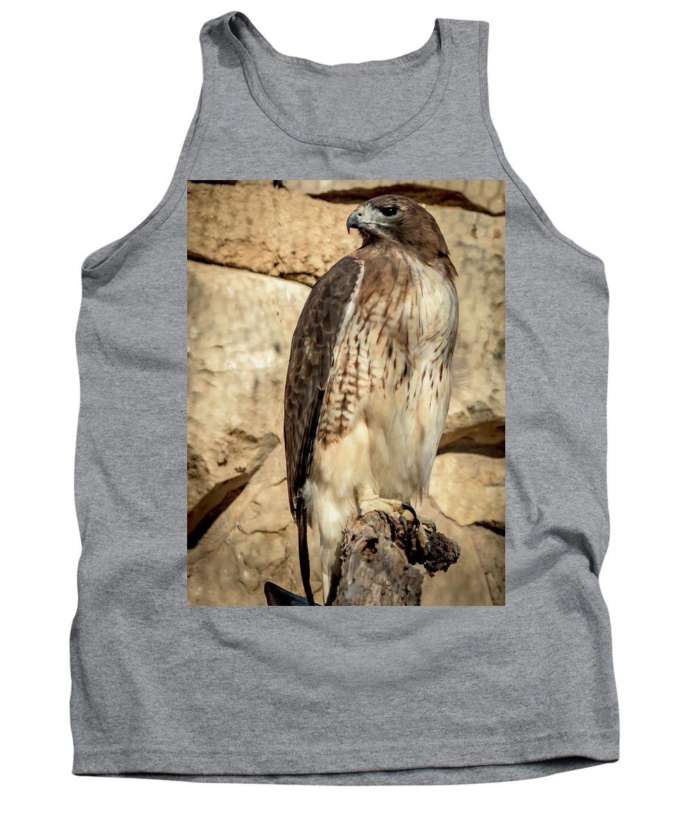 Red-tailed Hawk Tank Top featuring the photograph Red-tailed Hawk 4 by David Pine