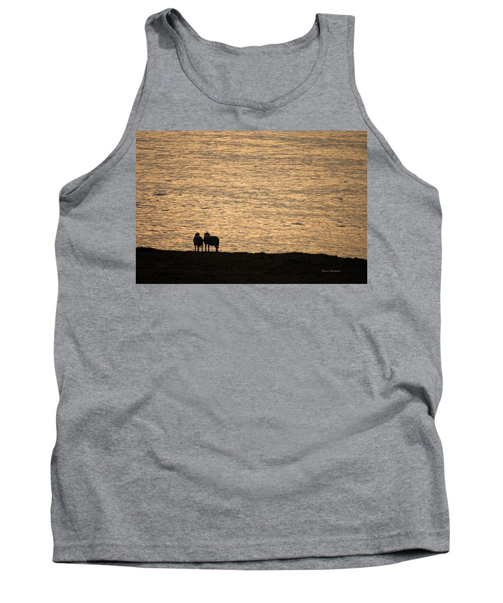 Sheep Tank Top featuring the photograph Romancing The Sheep by Donna Blackhall