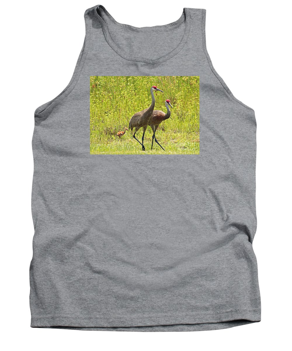 Sandhill Cranes Tank Top featuring the photograph Sandhill Crane Family by Carol Groenen