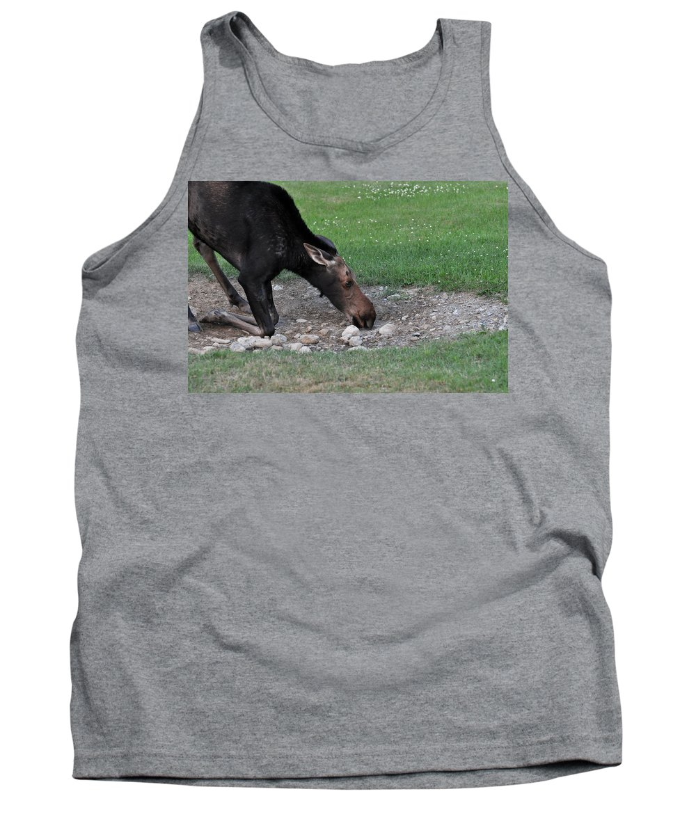 Moose Tank Top featuring the photograph Slurp by Glenn Gordon