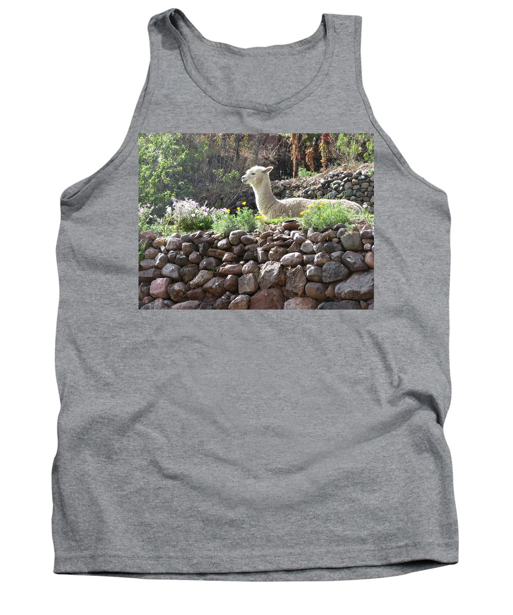 Llama Tank Top featuring the photograph Sunbathing 2 by Sandra Bourret