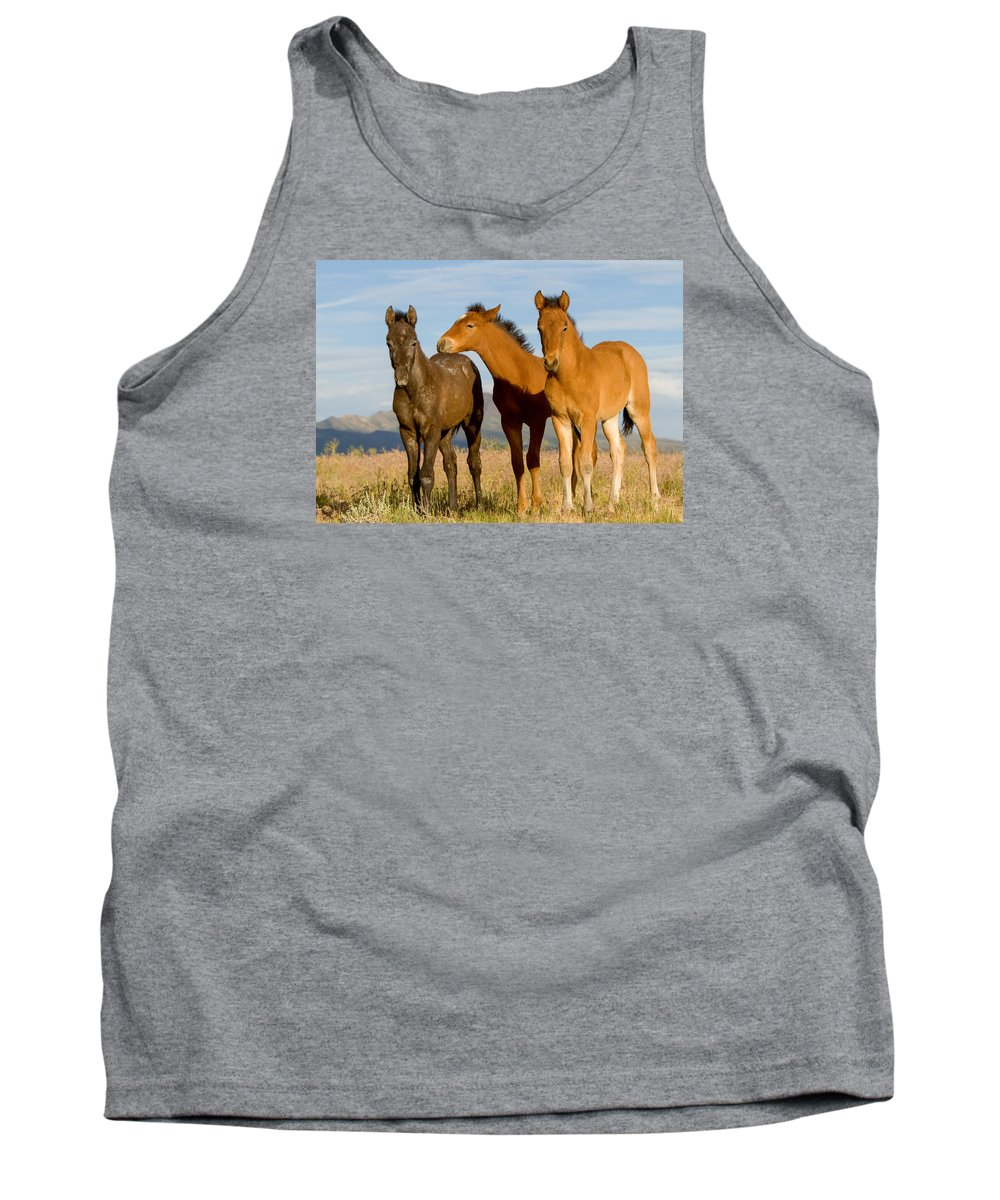 Wild Horse Tank Top featuring the photograph Three Foals by Kent Keller