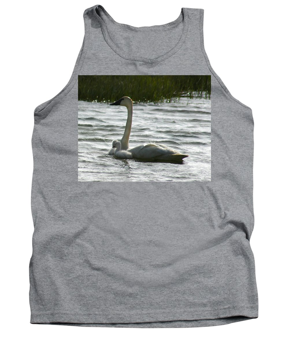 Swans Tank Top featuring the photograph Tundra Swan And Signets by Anthony Jones