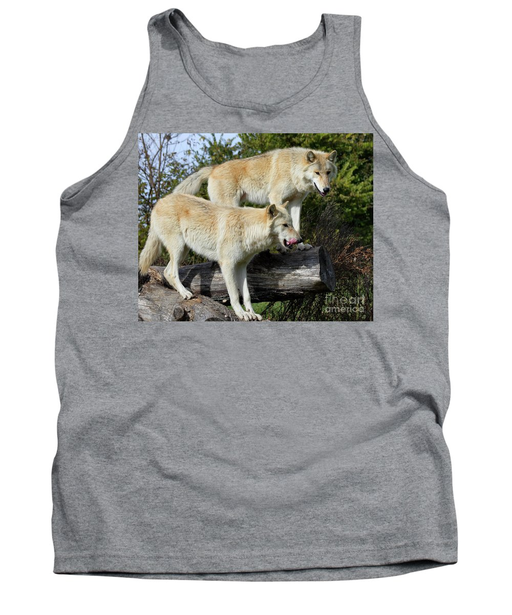 Animal Autumn Canine Carnivore Furry Grass Gray Grey Hunter Hunting Lupus Mammal Natural Nature Outdoors Predator Tank Top featuring the photograph Twin Blond Wolves by John Wijsman