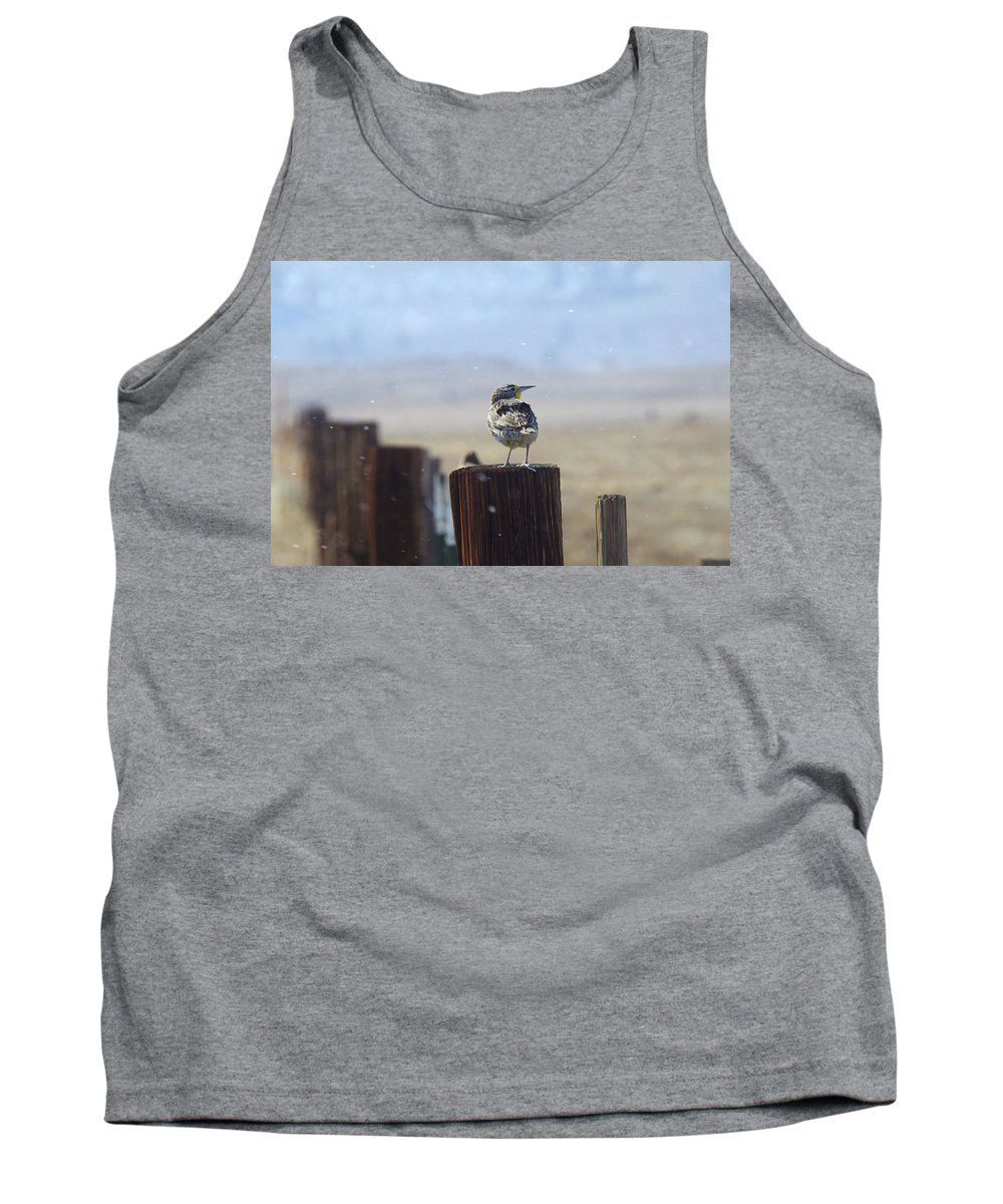 Yellow Rumped Warbler Tank Top featuring the photograph Watching It Snow by Sandra O'Toole