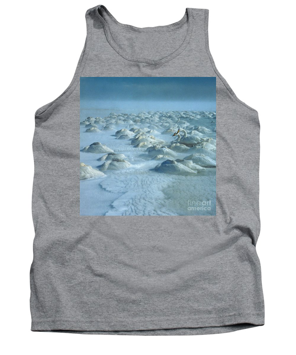 Whooper Swan Tank Top featuring the photograph Whooper Swans In Snow by Teiji Saga and Photo Researchers