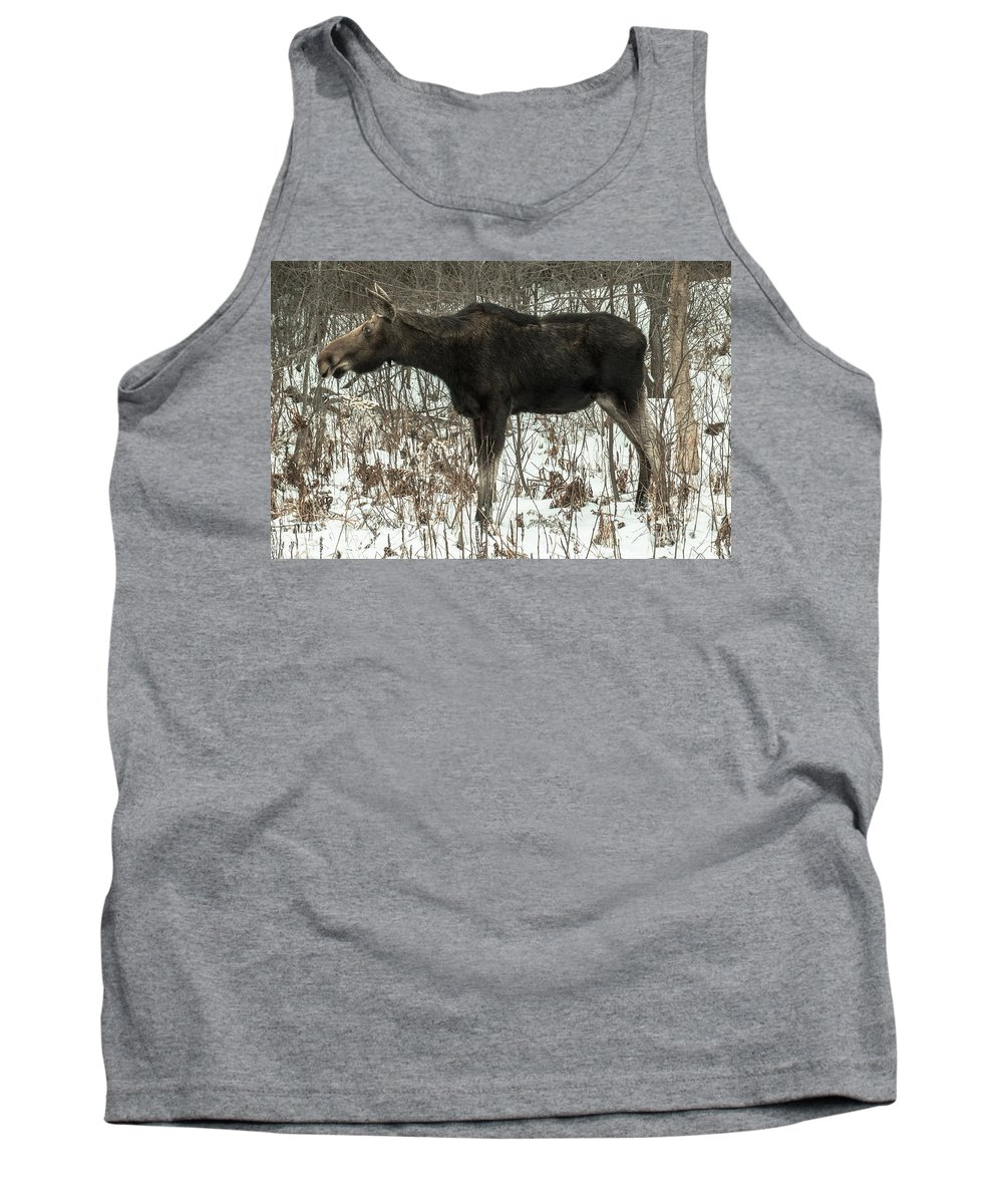 Moose Tank Top featuring the photograph Winter Moose by David Rucker