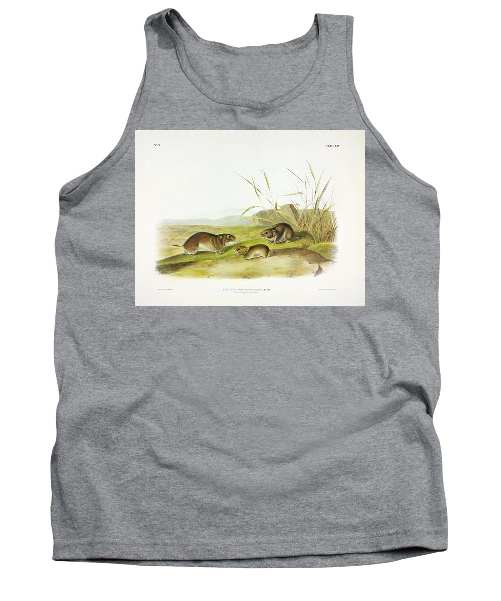 Yellow Tank Top featuring the painting Yellow-cheeked Meadow-mouse by John James Audubon