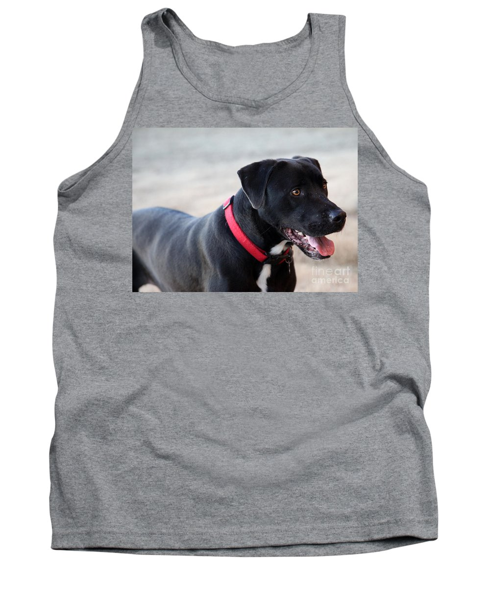 Dogs Tank Top featuring the photograph Yes I Want To Play by Amanda Barcon