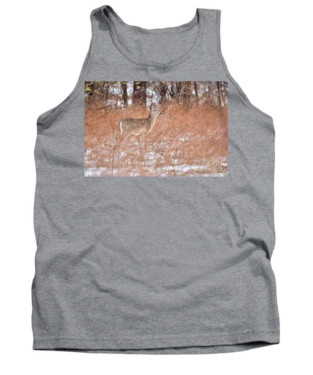 Animal Tank Top featuring the photograph Young White-tailed Deer In The Snow by Jeramey Lende