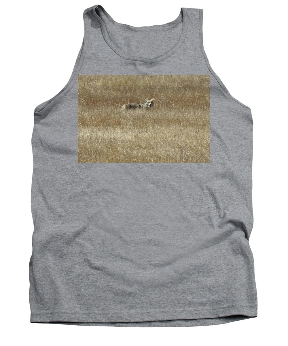 Coyote Tank Top featuring the photograph Yummy -got Me A Rat by Sandra O'Toole