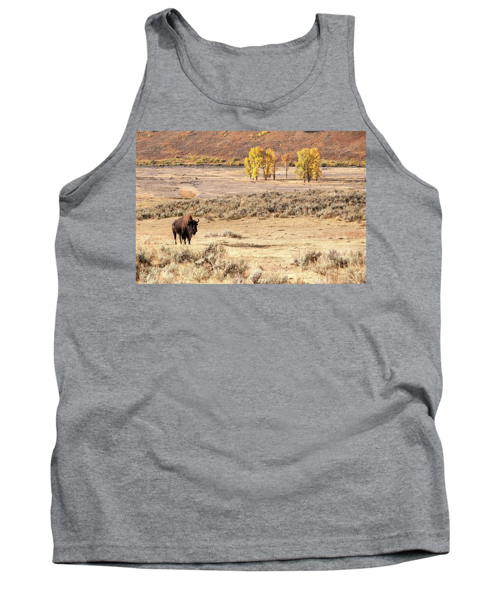 Yellowstone Tank Top featuring the photograph Bison And Cottonwoods by Steve Stuller