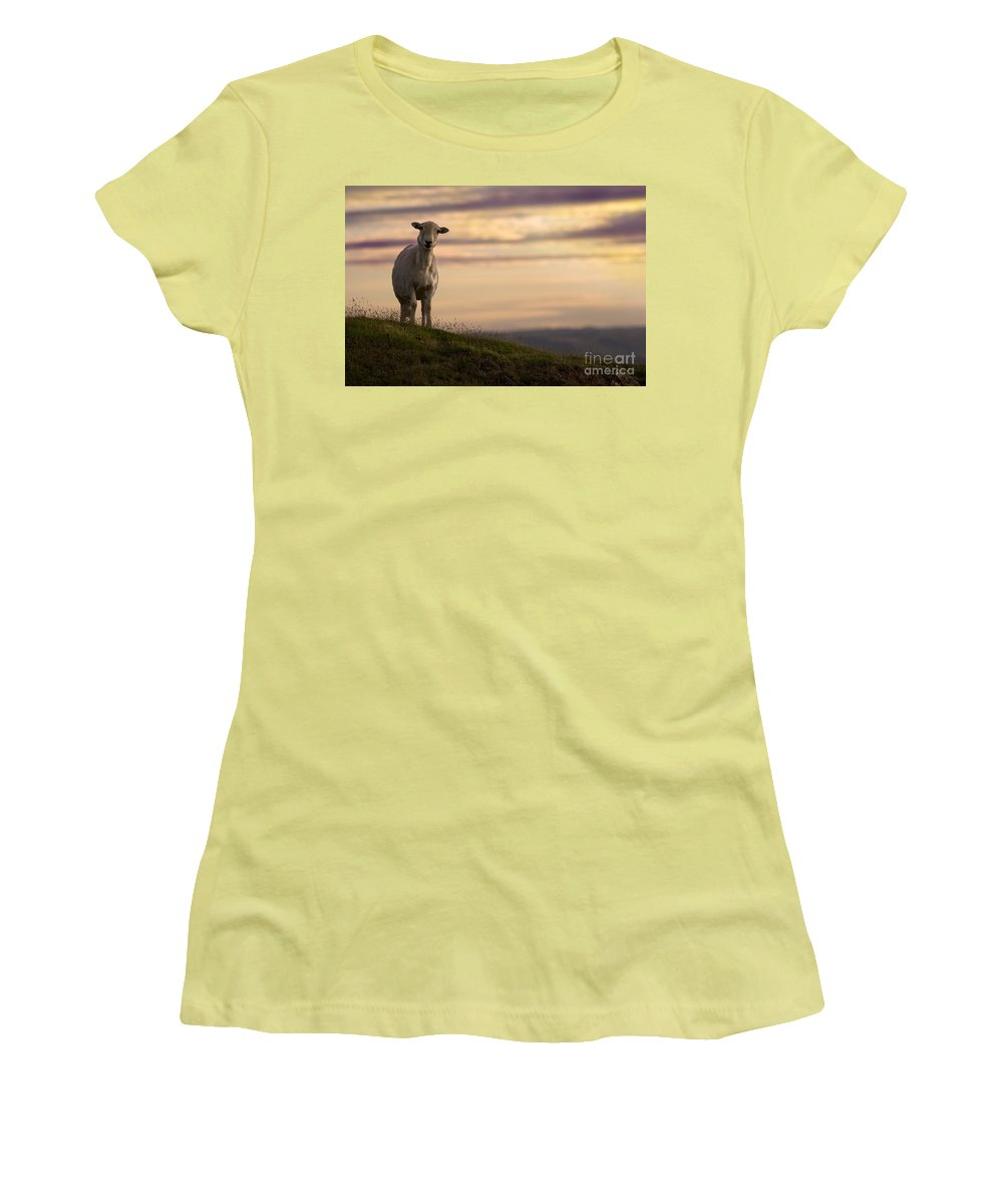 Sheep Women's T-Shirt (Athletic Fit) featuring the photograph On The Top Of The World by Angel Ciesniarska